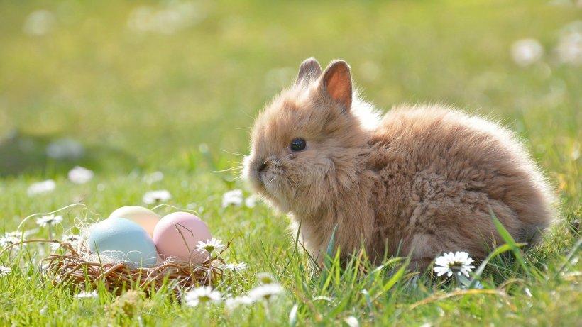 Mesaje de Paște. Cele mai inspirate mesaje și urări de Paște pentru persoanele iubite