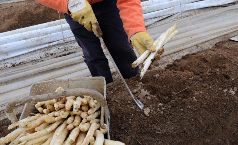 Mărturii teribile din fermele germane. Românii ar fi forțați să muncească peste 100 de ore pe săptămână