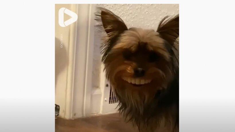 Un câine a furat proteza dentară a stăpânului. Ce a urmat, a devenit viral (VIDEO)