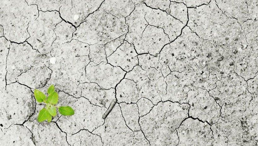 PSD: Întreaga Românie se confruntă cu o secetă severă. Executivul nu face nimic