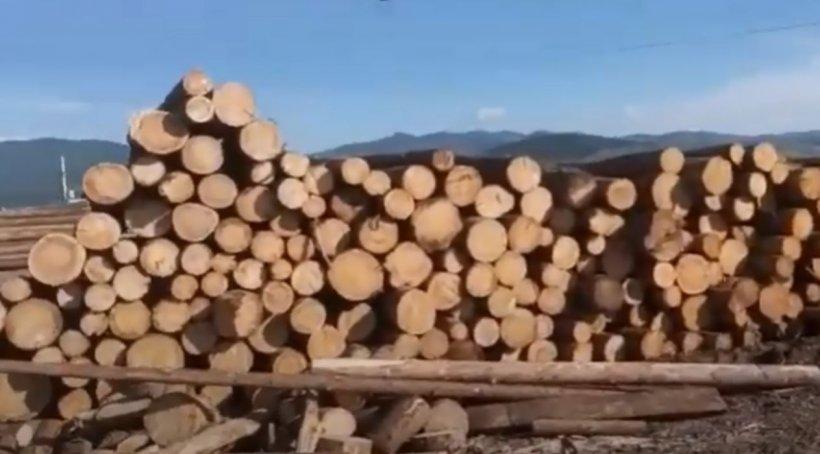 Şase persoane din Alba au fost reţinute. Ar fi sustras peste 1.900 metri cubi material lemnos din fondul forestier naţional