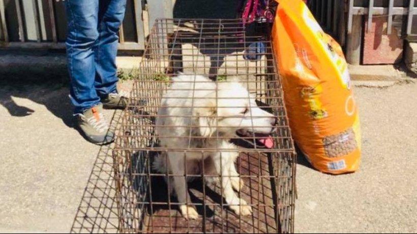 Românii au devenit sensibili în timpul izolării: 186 de câini au fost adoptați online