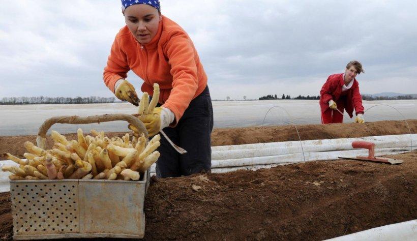 Muncitorii sezonieri, repatriați în România. Guvernul trimite un avion în Germania