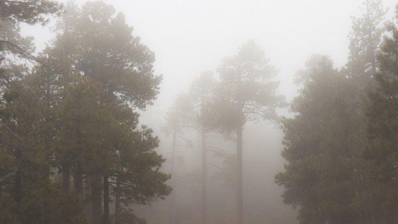 Mai multe persoane, rătăcite într-o zonă împădurită din Gorj. Căutările salvamontiștilor, îngreunate de ploaie