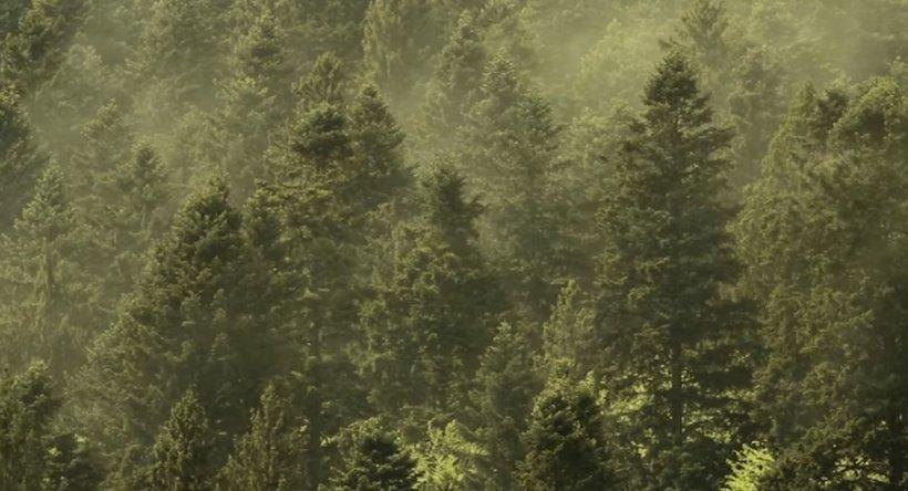Fenomen care are loc o singură zi pe an, filmat într-un parc național din România