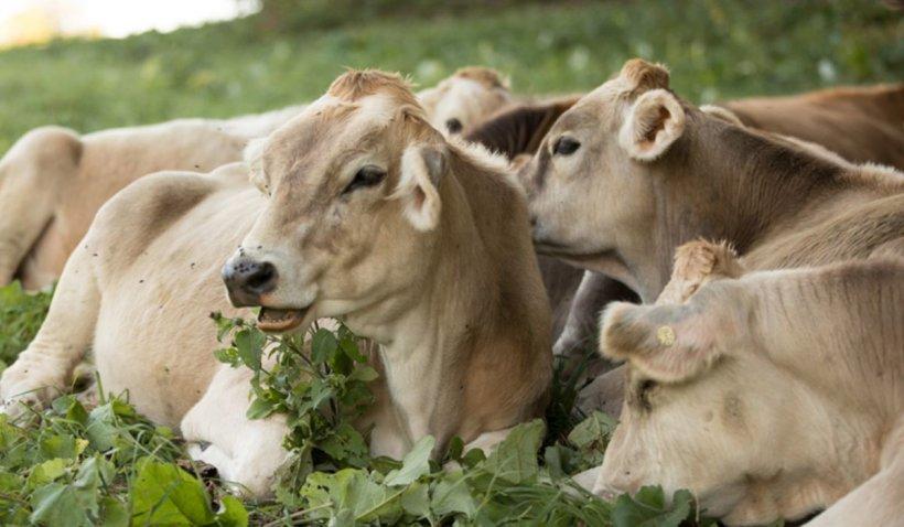 Importanta furajelor in cresterea animalelor din ferme (P)