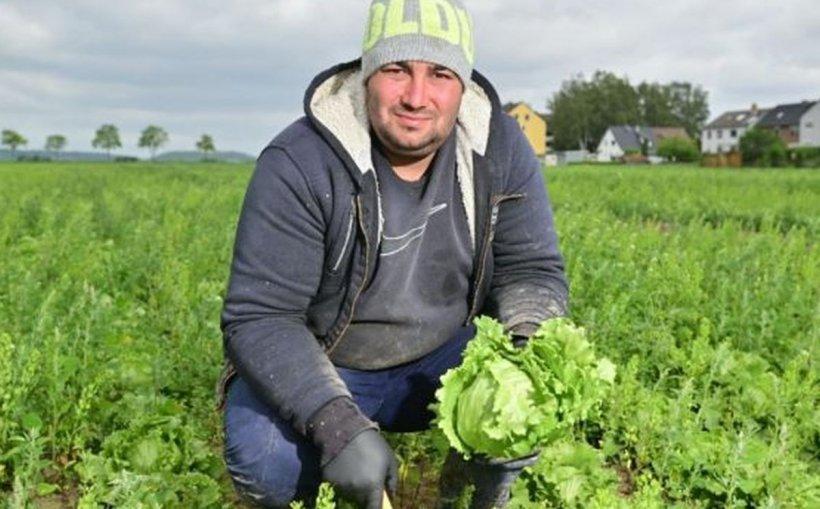 """Pastorul Radu Lăcătuș muncește la câmp, în Germania. """"Câştig aici în două luni cât tot anul în ţară"""""""
