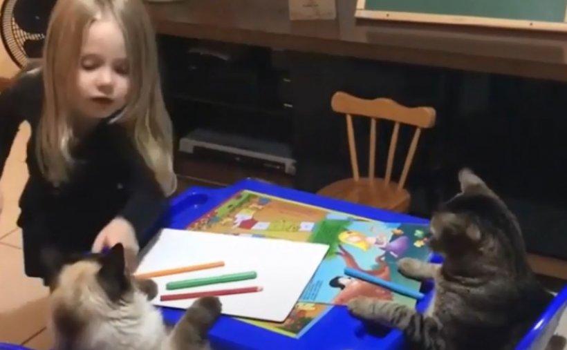 """Lecție de desen. O fetița și-a """"învățat"""" pisicile cum să deseneze o floare, iar imaginile au devenit virale"""