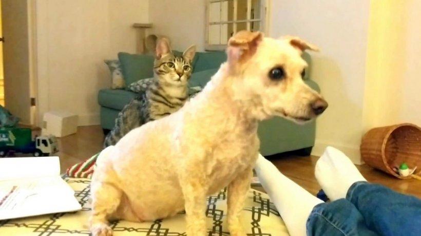 Pisica familiei nu și-a recunoscut prietenul-cățel când acesta a venit acasă cu o altă tunsoare. Reacția felinei a devenit virală (VIDEO)