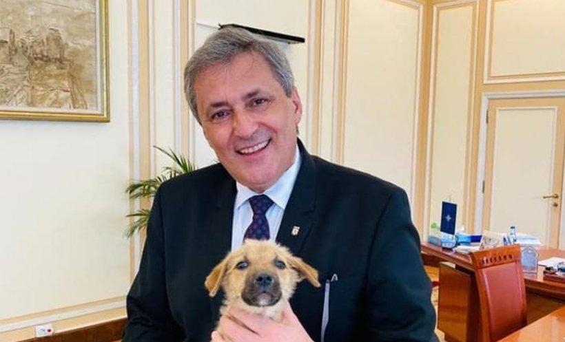 MAI a adoptat un cățeluș. Marcel Vela, apel către români: Vă rog să îmi scrieți mesaj în privat! - FOTO