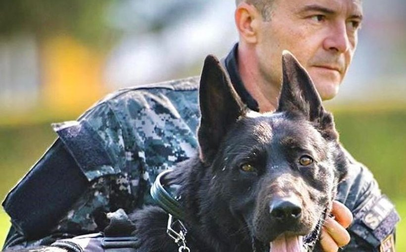 Mesajul emoționant al unui ofițer, după ce un câine polițist a murit: Pentru mine a fost copil, frate și camarad!