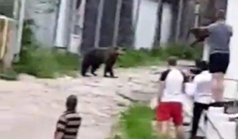 Turiștii din Slănic Moldova și-au pus viața în pericol pentru a filma un urs care se plimba pe lângă terase