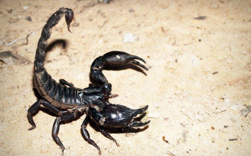 Locul din România în care poți călca pe un scorpion