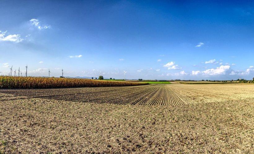 Agricool. 400 de soiuri şi hibrizi de grâu în testare, la Dâlga