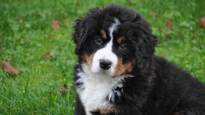 Dureros! Câinii adoptați în timpul pandemiei, trimiși din nou la adăpost