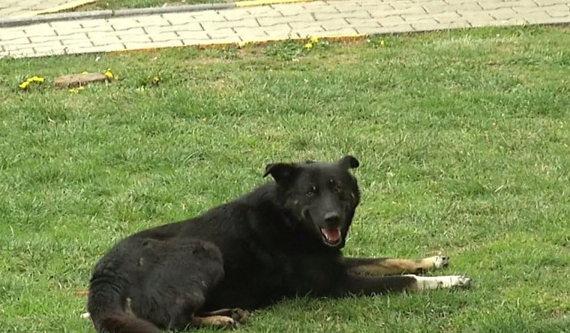 Copil din Blaj, mușcat de un câine scăpat dintr-o curte. Ce sancțiune a primit stăpânul