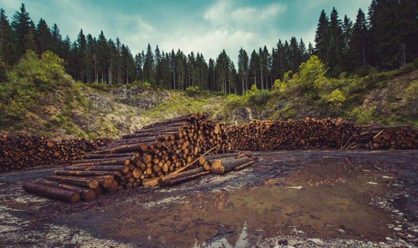 Un pădurar din Galați a prins doi hoți de lemne, dar nu se aștepta la una ca asta. Turnură spectaculoasă după ce a tras două focuri de avertisment