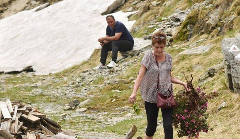 O turistă a furat o specie protejată de bujor de munte. Mesaj Salvamont: În ciuda legendelor, ceaiul de bujor nu mai scoală nimic!