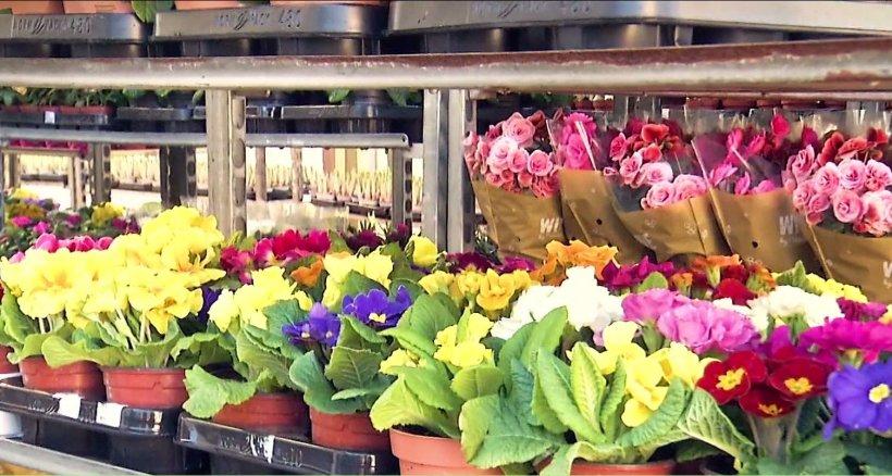 Numai de bine. Flori colorate pentru o grădină însorită