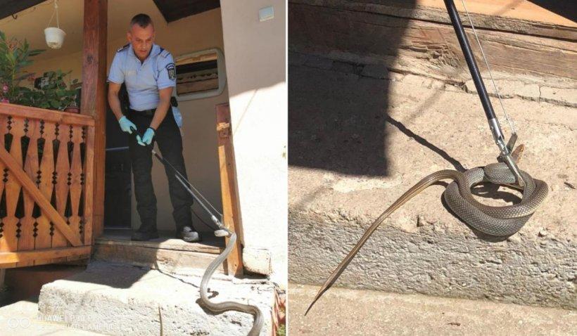 """Șarpe de 1,5 metri găsit în casa unei familii din Mehedinți: """"Nu vă apropiați!"""""""