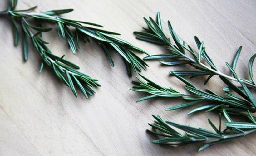 Ceaiul de rozmarin, tratament benefic pentru stimularea funcționării sistemului nervos