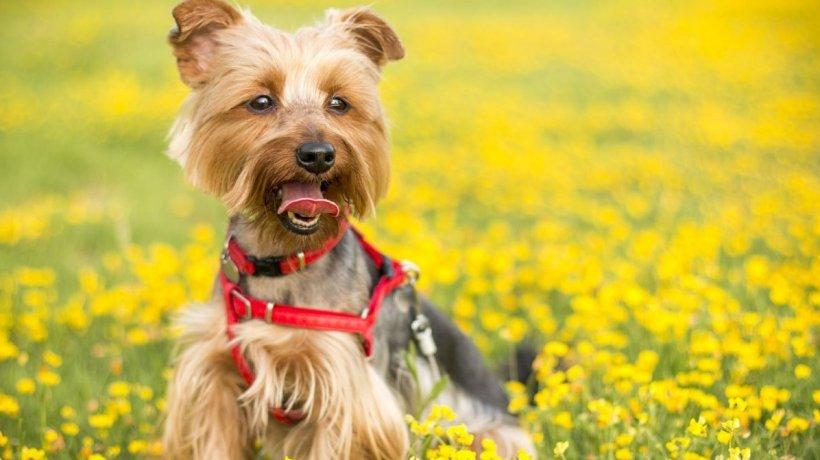 Sunt legumele rele pentru câini?