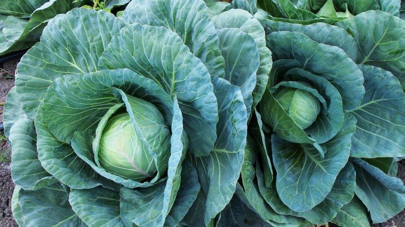 Alimentul banal care e un adevărat elixir pentru sănătate! Previne cancerul, hepatita și obezitatea