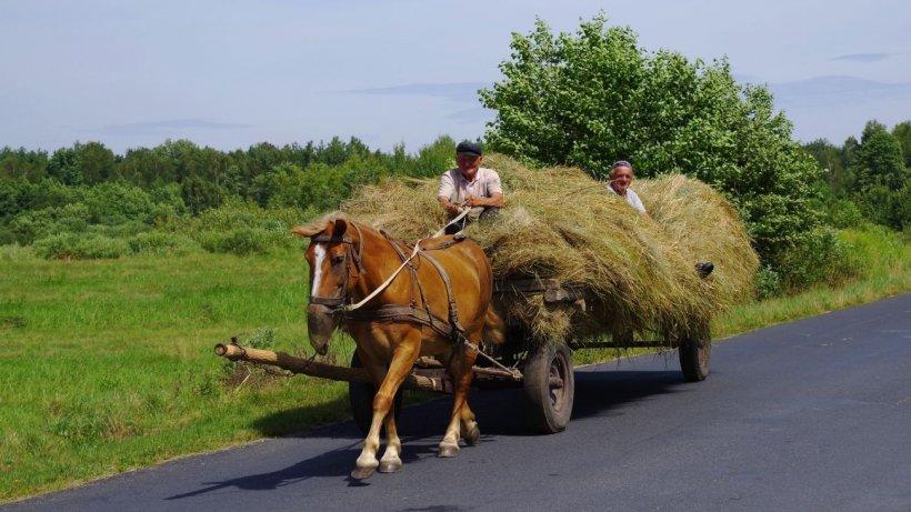 Carantină totală într-o localitate din România. Oamenii sunt speriaţi şi spun că supravieţuiesc cum pot