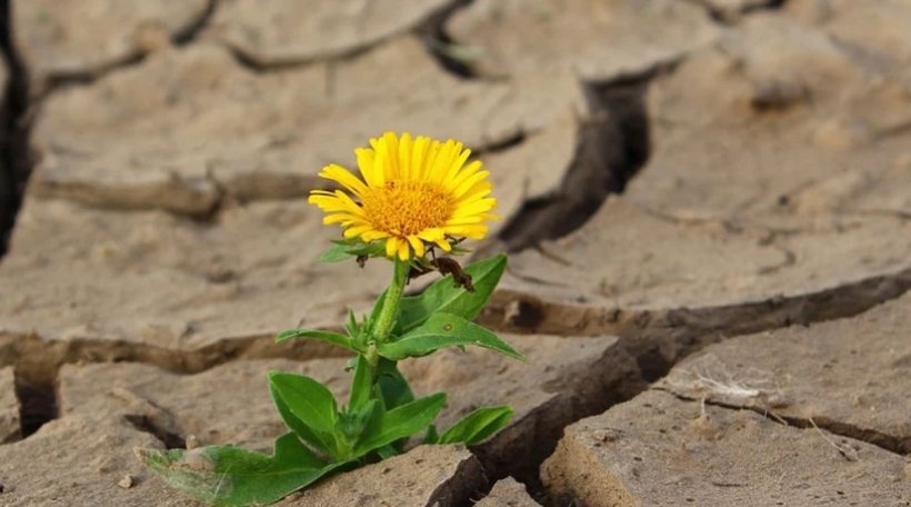 Alertă de la meteorologi. Cea mai gravă secetă din ultimii ani! Situația nu este bună nicăieri în țară
