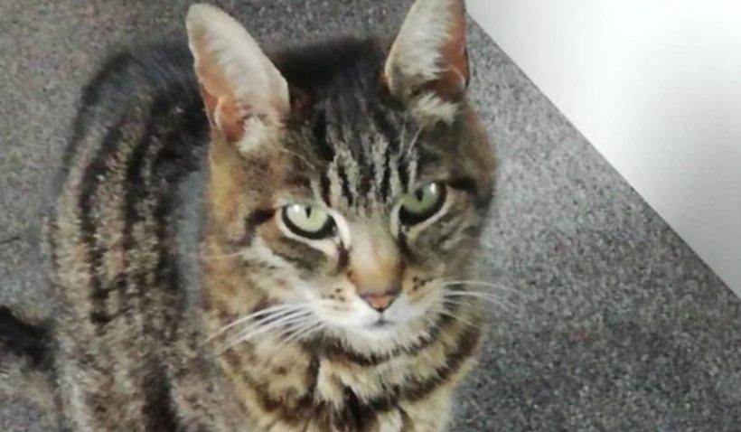 O pisică a supravieţuit două luni închisă într-un container, cu păianjeni şi condensul de pe pereţi