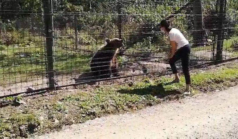 Rezervaţia de la Zărneşti, raiul animalelor chinuite, confiscate și salvate. Povestea emoționantă a urșilor salvați de la moarte