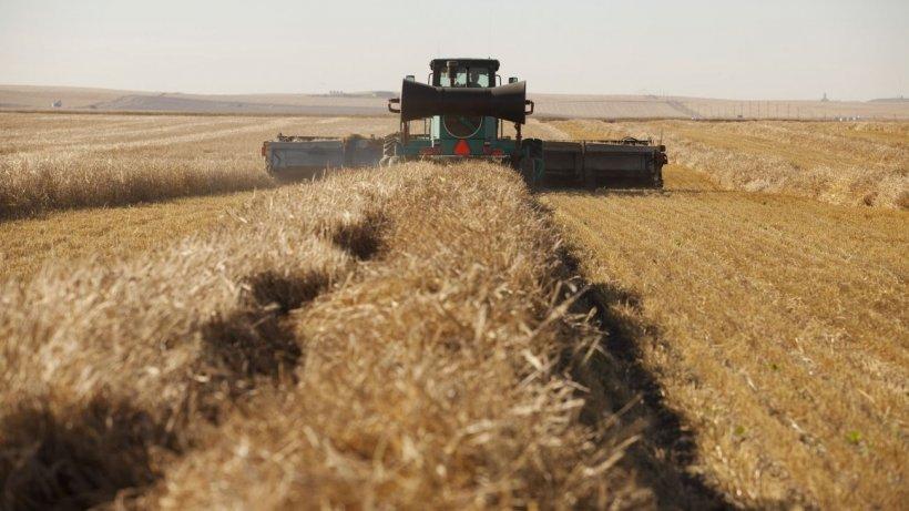 Agricultorii se plâng că recolta de toamnă este aproape distrusă. Anunţul făcut de meteorologi