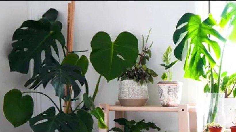 Ultima modă în materie de plante. Ce sfaturi ne dau specialiștii din afară