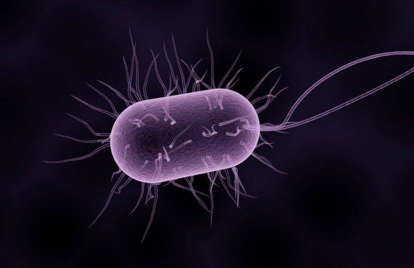 Alertă de maximă urgență! Bacterie care mănâncă creierul, găsită în apa potabilă