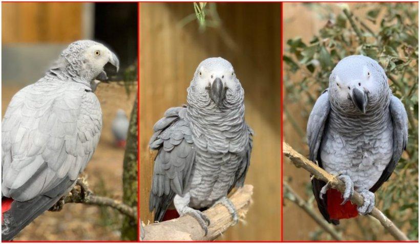 Surpriză! Cinci papagali, trimiși la reeducare pentru că înjurau vizitatorii unei grădine zoologice