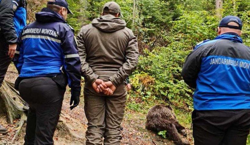Ursul agresiv din Buşteni, capturat de jandarmi. Ce se va întâmpla cu animalul