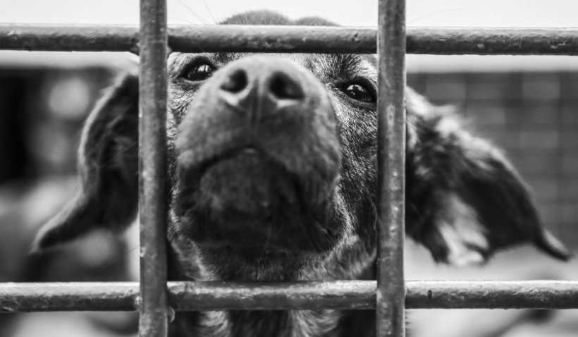 """Numărul câinilor abandonați a crescut simțitor în acest an: """"Stop abandon! Adoptă un cățel!"""""""