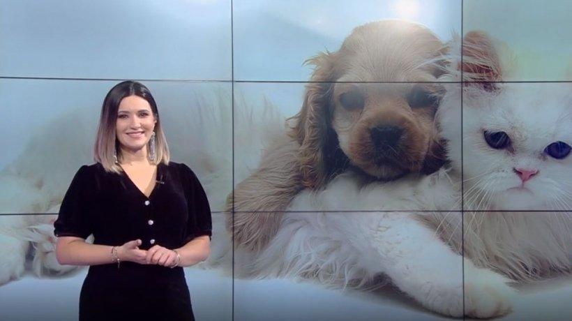 Cum îngrijim puii de pisică sau de câine. Medic veterinar: ''Nu îi scoateţi afară în primele luni de viaţă!''