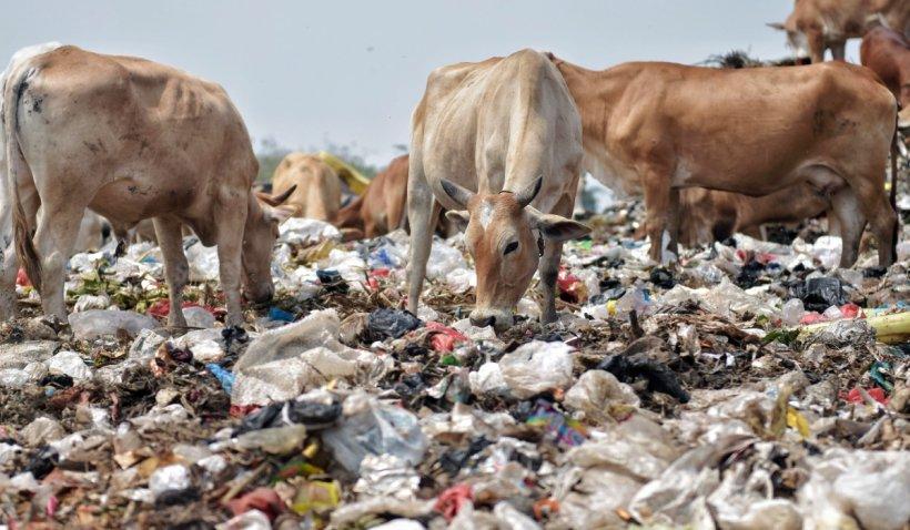 ONU: Oamenii aruncă la gunoi aproape un miliard de tone de alimente în fiecare an