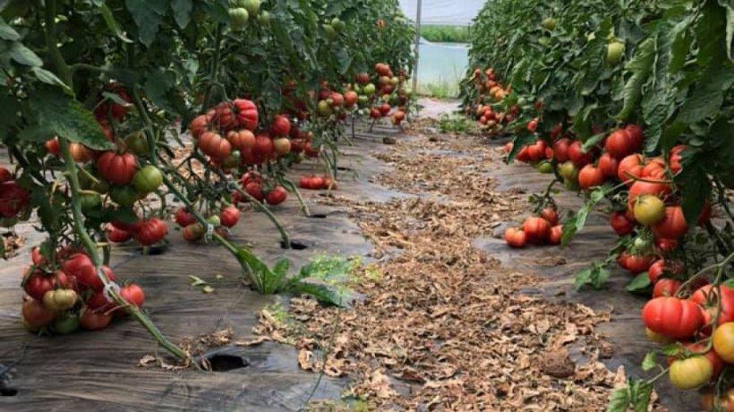 Nuoricum.ro, specialistul tău în creșterea legumelor