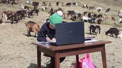 O fetiță de 10 ani face școală online pe vârf de munte, între animale