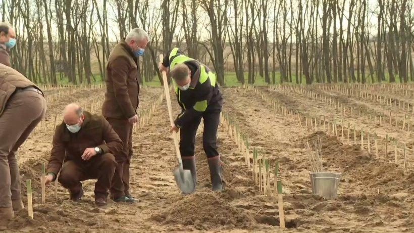 Iohannis, la campania de împădurire din Dolj: Vom aloca 1,5 miliarde de euro pentru reîmpăduriri