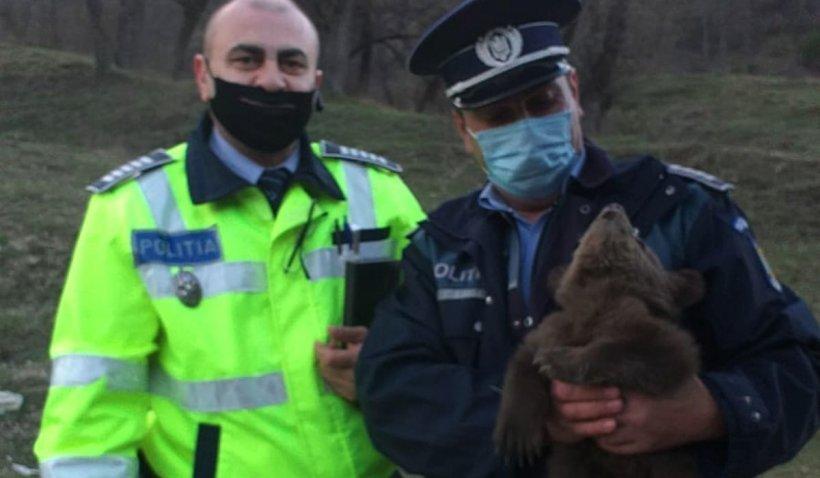 Un pui de urs care şi-a pierdut mama a fost găsit pe marginea unui drum din Vrancea