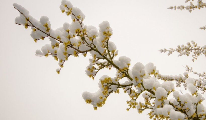 Prognoza meteo 12 aprilie 2021. Azi primăvară autentică cu 23 de grade, miercuri - ninsori. Zăpadă pe pârtii, de Paşte