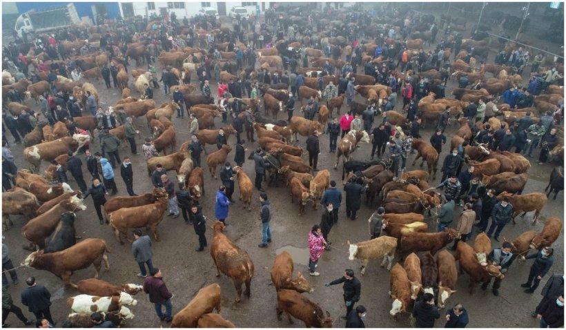 OMS cere interzicerea vânzării de animale vii în piețe