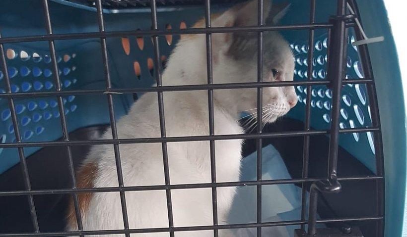 Pisica, ultima inovaţie în traficul de droguri. Felina a fost capturată pe când încerca să transporte stupefiante la închisoare