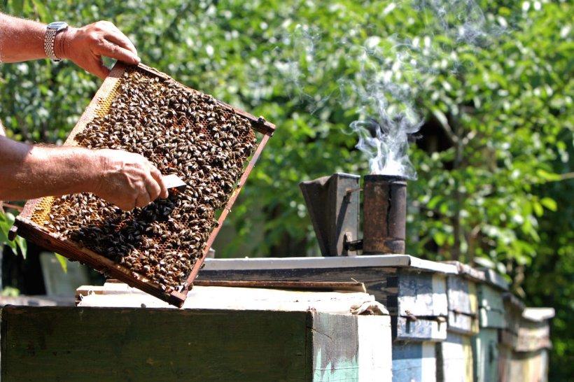 """Bărbat mort după ce a fost înţepat de albine, în Gorj: """"Rămâi crucit când auzi aşa ceva"""""""