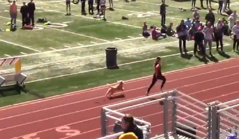 Un căţel a ajuns vedetă în SUA după ce a intrat pe pistă la un concurs de atletism şi a câştigat