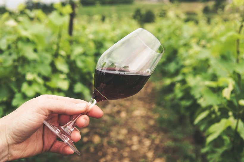 Totul despre arta vinului
