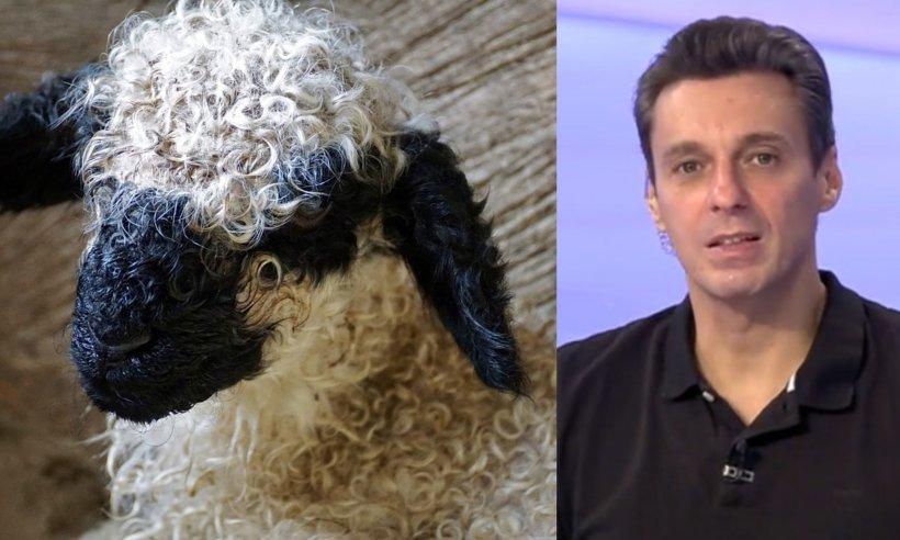 Mircea Badea: Atenție la miel să nu aibă canini